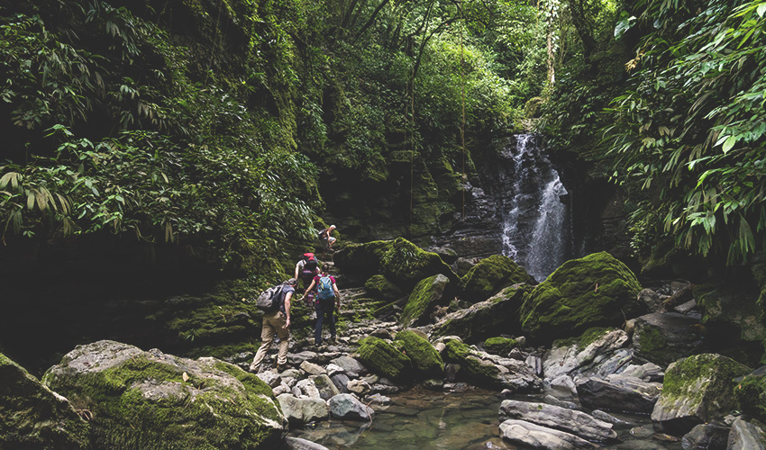group of people trekking beside a river in a forest