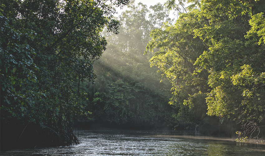 picture of a river in middle of a jungle with sunlight